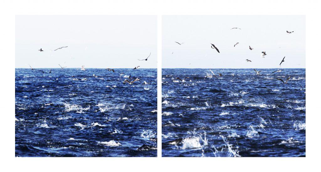 Albatrosse_Dunedin