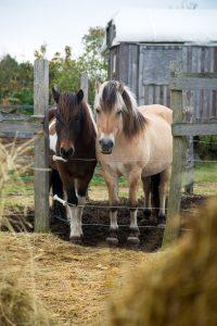 pferde_im_gatter_388A9909